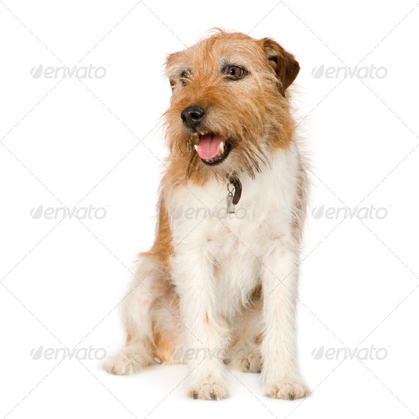 Bastard (10 years) - Stock Photo - Images