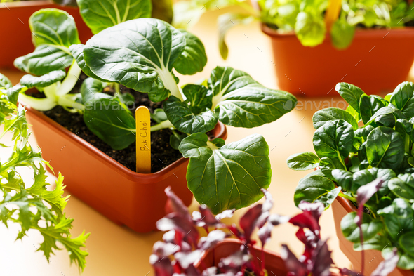 Home grown organic herbs - Stock Photo - Images