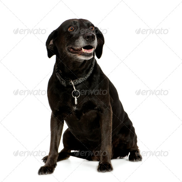 Bastard (9 years) - Stock Photo - Images