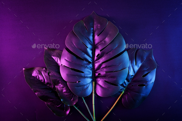 Contemporary night neon lighting and monstera leaves and exotic tropical plants. - Stock Photo - Images