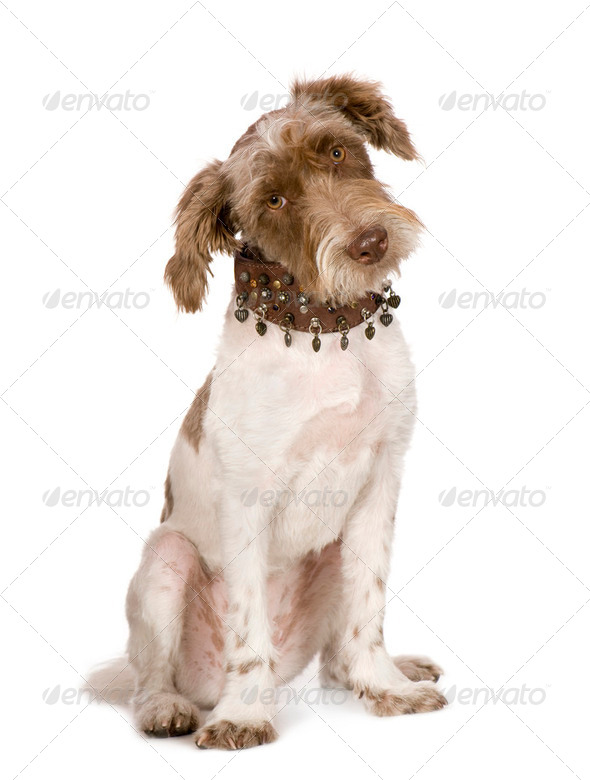 Bastard (8 months) - Stock Photo - Images