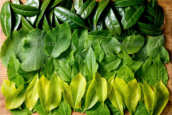 Background made of green leaves, green gradient - Stock Photo - Images