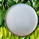 Empty ceramic plate on background made of green leaves - PhotoDune Item for Sale