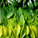 Background made of green leaves, green gradient - PhotoDune Item for Sale