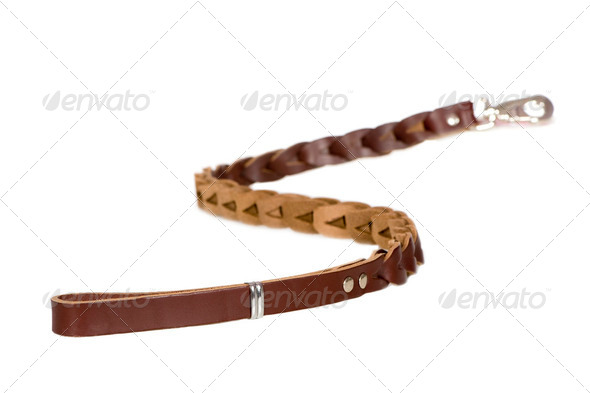 Dog Leash - Stock Photo - Images