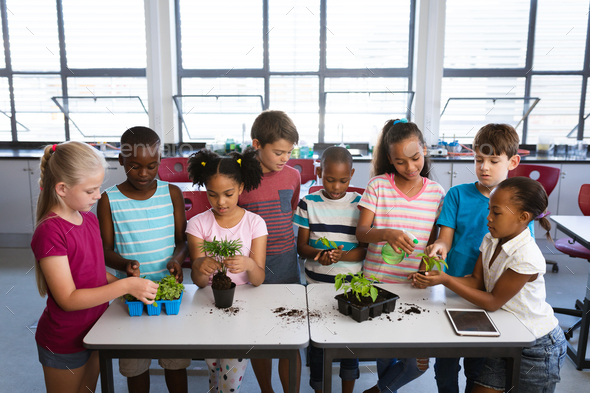 Group of diverse students transplanting and watering plant seedlings together at school - Stock Photo - Images