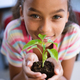 Portrait of african american girl holding a plant seedling in the class at school - PhotoDune Item for Sale