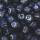 Ripe large blueberries with water drops, food background, close-up - PhotoDune Item for Sale