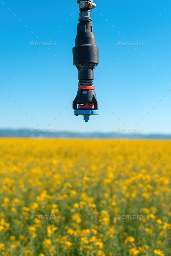 Linear or lateral move irrigation with rotator style pivot applicator sprinkler in rapeseed field - Stock Photo - Images