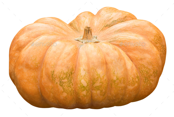Fresh harvest pumpkin on white background isolate - Stock Photo - Images