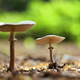 Mushroom in the forest - PhotoDune Item for Sale