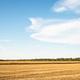 Summer Cornfield Harvesting. - PhotoDune Item for Sale