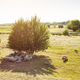 Farmland with Flock of Sheep. - PhotoDune Item for Sale