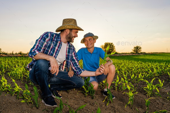 Family cultivating corn - Stock Photo - Images