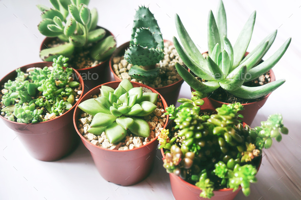 Beautiful and green succulent plants - Stock Photo - Images