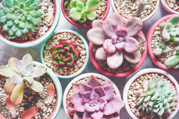 Mix of beautiful succulent plants with pastel colors - Stock Photo - Images