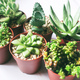 Beautiful and green succulent plants - PhotoDune Item for Sale