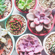 Mix of beautiful succulent plants with pastel colors - PhotoDune Item for Sale