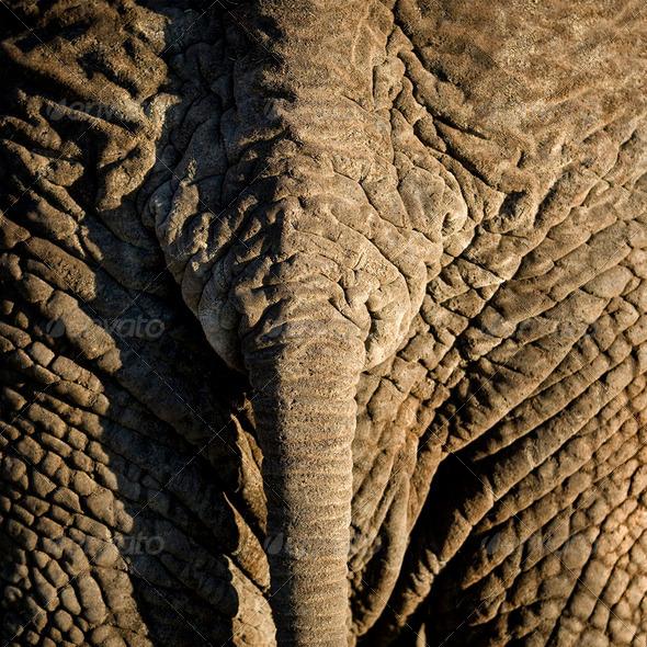 elephant's skin - Stock Photo - Images