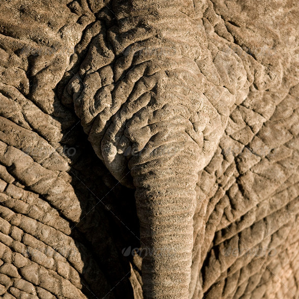 elephant's skin - Stock Photo - Images