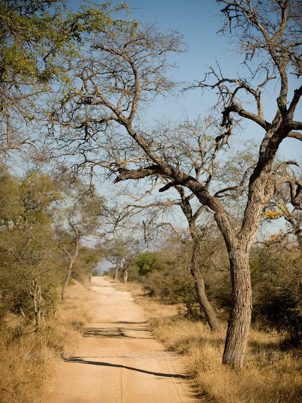 road through Krugger national park - Stock Photo - Images