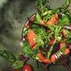 Salmon salad with arugula, beet leaves, radicchio, tomatoes, lemon and olive oil dressing - PhotoDune Item for Sale