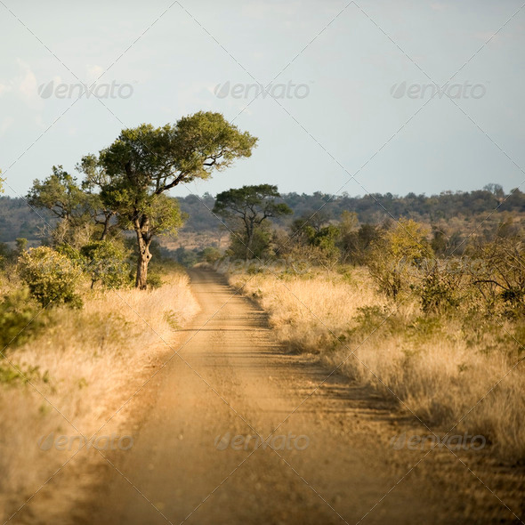 road at the krugger park - Stock Photo - Images