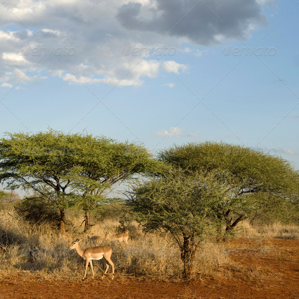 African landscape - Stock Photo - Images