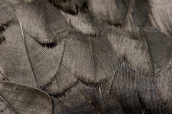 Black feather - Stock Photo - Images
