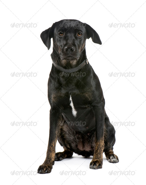 Bastard (11 months) - Stock Photo - Images