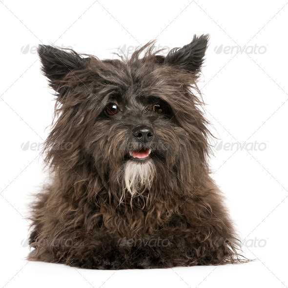 Bastard (1 year) - Stock Photo - Images
