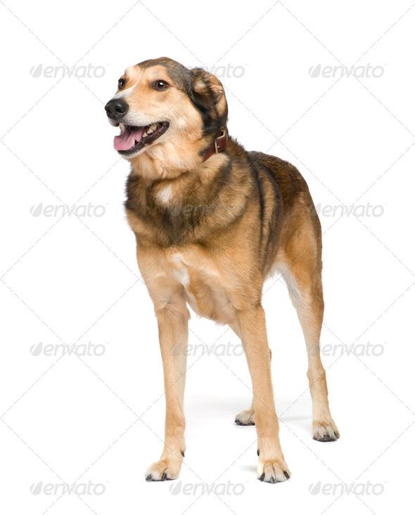 Mixed-Breed Dog - Stock Photo - Images