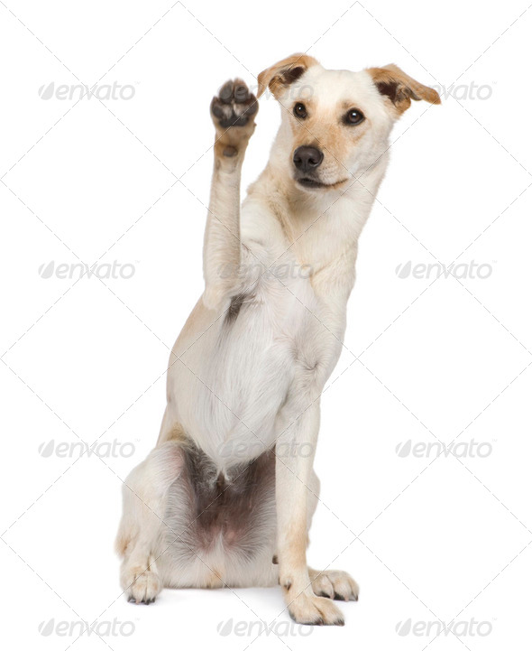 Bastard (18 months) - Stock Photo - Images