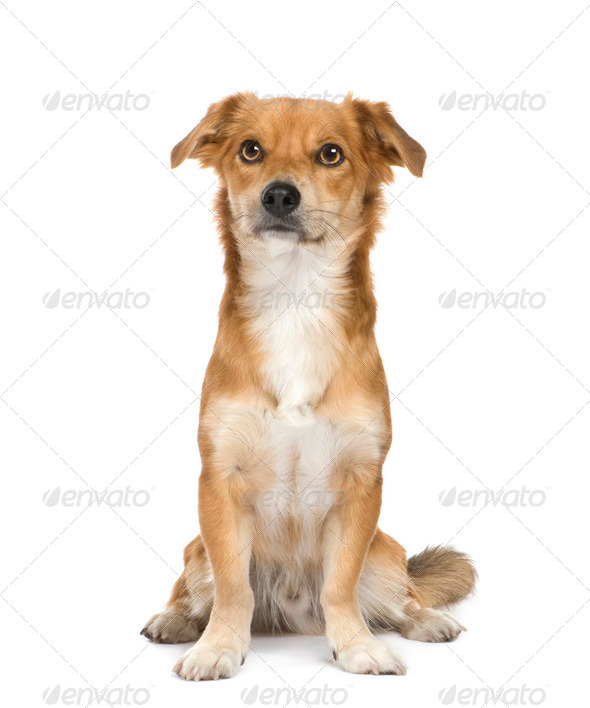 Bastard (2 years) - Stock Photo - Images