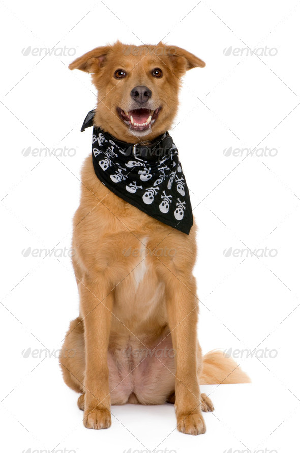 Bastard (6 years) - Stock Photo - Images