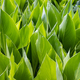 bright green leaves background - PhotoDune Item for Sale