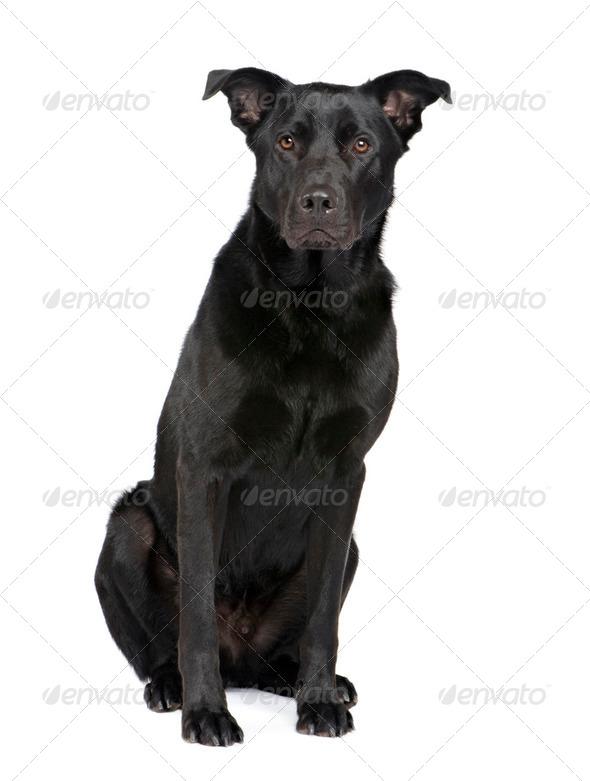 Bastard (18 months) - Stock Photo - Images