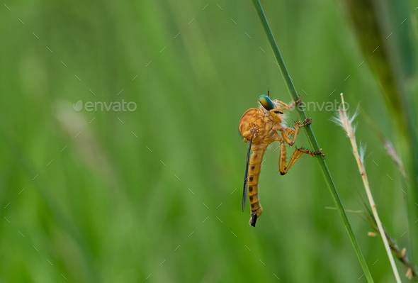 Insect on a blade of grass - Stock Photo - Images