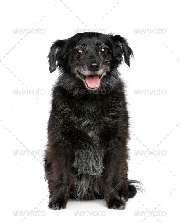 old Bastard (9 years) - Stock Photo - Images