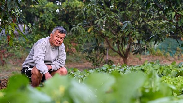 A senior farmer looks proudly at the camera in the vegetable field. - Stock Photo - Images