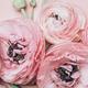 Floral arrangments of tender ranunculus flowers - PhotoDune Item for Sale