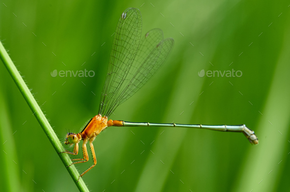 close up of a dragonfly on the grass stem - Stock Photo - Images