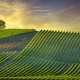 Vineyard and tree at sunset. Castellina in Chianti, Tuscany, Italy - PhotoDune Item for Sale