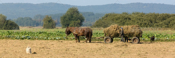 Horse working in the field - Stock Photo - Images