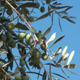 Olive Branch - VideoHive Item for Sale