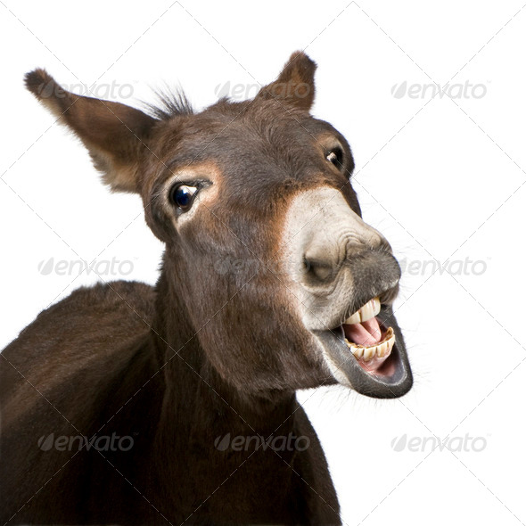 donkey (4 years) - Stock Photo - Images