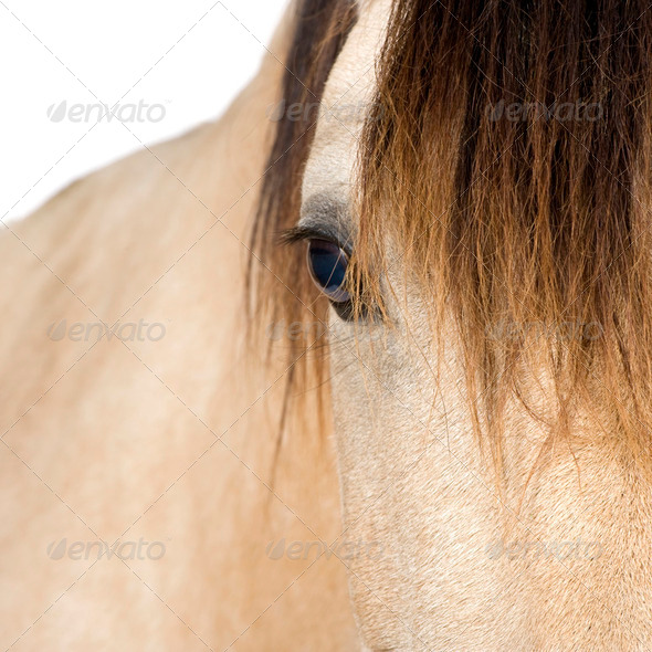 close-up on a Horse - Stock Photo - Images