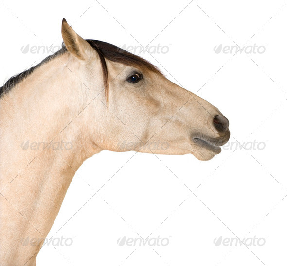 Close up on a Horse - Stock Photo - Images