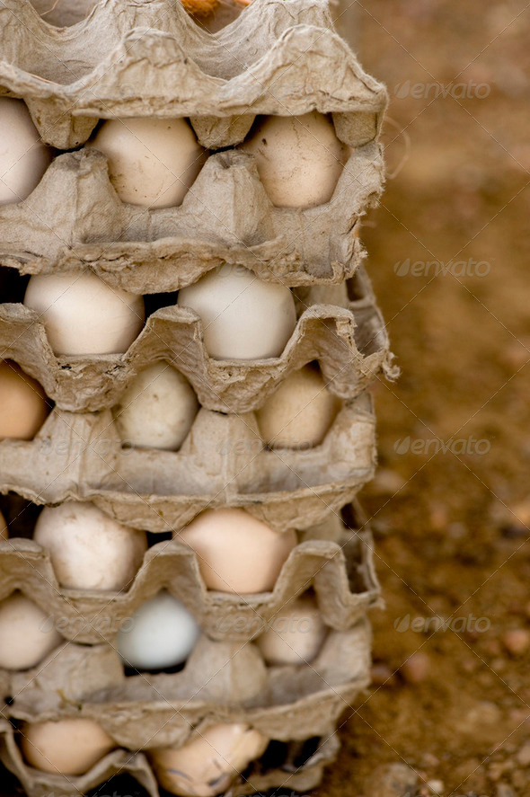 eggs in a old packaging - Stock Photo - Images