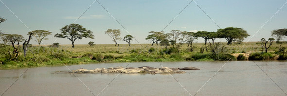 hippo pool at the Serengeti - Stock Photo - Images
